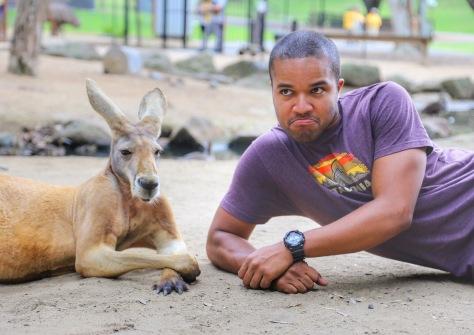 kangaroo australia currumbin